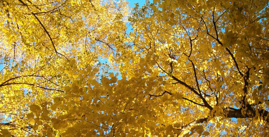 20 canzoni sull'autunno.